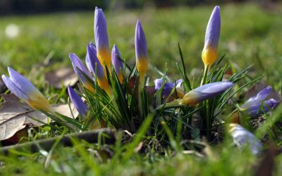 Tavasz érkezése