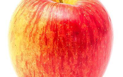 Gyümölcsök királynője, az alma